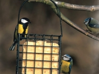 Lintulaudat ja ruokintalaitteet