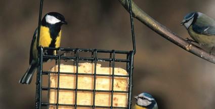 Lintujen talviruokinta laitteet-24