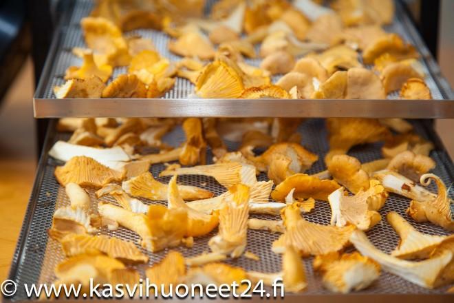 sienten kuivaus-2